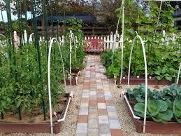 florida vegetable gardening. Staked Indeterminate Tomatoes On Left Florida Vegetable Gardening 8