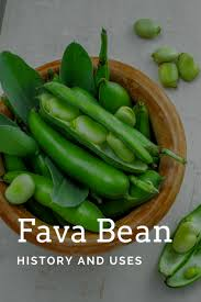 fava bean history and uses