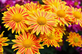 fall flower child add bloom power to your garden