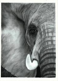 Elephant (Head) by Peter-Arnold on DeviantArt
