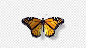 Saat ini buah apel selain dikonsumsi dalam bentuk buah segar, sudah berkembang pengolahannya menjadi berbagai macam bentuk makanan dan minuman seperti sirup apel, kripik apel, teh apel, jus apel, dodo lapel, dan masih banyak lainnya. Gambar Kupu Kupu Monarch Pieridae Ngengat Kupu Kupu Berkaki Sikat Ulat Siklus Hidup Biologis Ilustrasi Biologis Sains Ilustrasi Biologis Siklus Hidup Biologis Sikat Kupu Kupu Dengan Kaki Png Pngwing