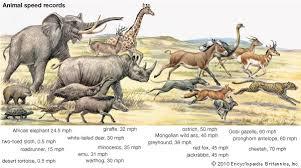 Animal Speed Chart Speeds Of Animals Hos Ting