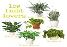 cool office plants. ordinary indoor office plants no light low loving houseplants perfect for a small apartment with cool