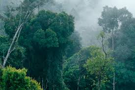tropical rainforest raining. Wonderful Tropical Early Morning Misty View Of The Rain Forest East Kalimantan Indonesia  Borneo  Throughout Tropical Rainforest Raining F