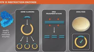 Restriction Endonucleases Products Neb