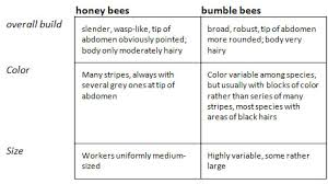 How To Tell The Difference Between Honey Bees And Bumble