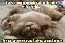 cute kittens quotes for kids. Interesting Quotes Sleeping Quotes Funny  Quote About Kids  How Can Someone So Small  Take Up Throughout Cute Kittens For Pinterest
