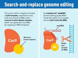 Crispr Design Tool Broad New Crispr Genome Editing System Offers A Wide Range Of