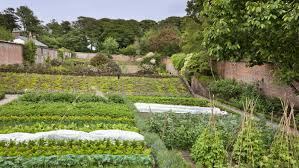 Walled Kitchen Gardens Our Top Kitchen Gardens National Trust