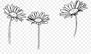 tumblr transparents black and white flowers. Wonderful Tumblr Clip Art Drawing Flower Image Floral Design  Sunflowers Tumblr 2560 Intended Tumblr Transparents Black And White Flowers D
