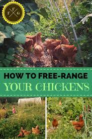 Kitchen Garden Hens How To Free Range Your Chickens In The Garden Family Food Garden