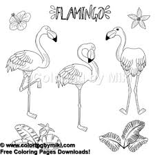 Summer Vacation Flamingo Coloring Page 761 Coloring By Miki
