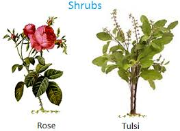 Plants Around Us Big Small Plants Shrubs Herbs