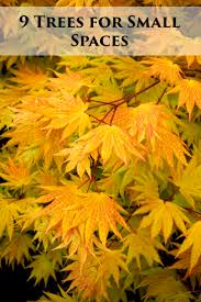 Fall Landscaping 66 Best Fall Plants Images On Pinterest Landscaping Ideas Fall