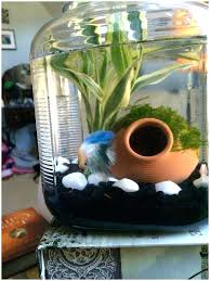 betta fish tank ideas diy betta fish tank ideas