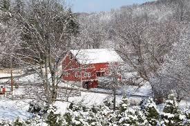NJ Christmas tree farm, Cut Your Own, U cut
