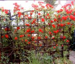 ... Ideas With Brown Wood Beautiful Garden Decoration Using English Garden  Trellis : Artistic Small Garden Decoration For Your Front Yard ...