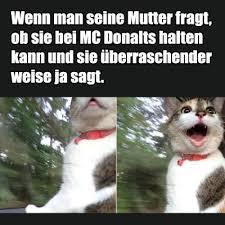 Neue Beiträge Mit Katzen Tag Kostenlose Lustige Bilder Für