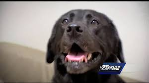 New Cancer Treatment For Dogs Explained