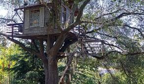 Simple Kids Tree Houses A Ladder Or Staircase Simple Kids Tree
