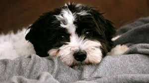 107 best black and white dog names for