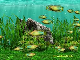animated moving fish wallpapers. And Animated Moving Fish Wallpapers