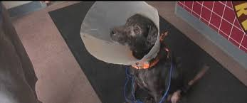 Rescued Dog Allergic to Humans Gets Special Treatment, New Home in ...