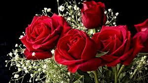full hd images of rose. Modren Full 1920x1080 Wallpaper Roses Flowers Gypsophila Flower Background In Full Hd Images Of Rose