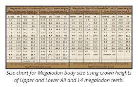 Shark Tooth Size Chart Gourmet Mexican Recipes Megalodon Tooth Size Chart