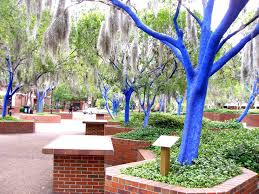 Image result for university of florida at gainesville