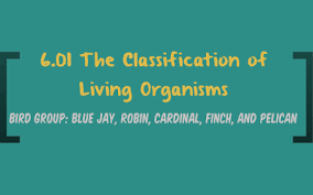 Blue Jay Robin Cardinal Finch And Pelican Taxonomy Chart 6 01 The Classification Of Living Organisms By Justin Taylor