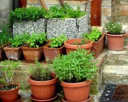 outdoor herb garden. Growing Your Own Herbs Outdoor Herb Garden Y