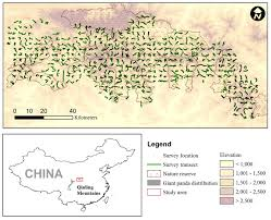 Giant Panda Population Chart Climate Change Not The Only Threat To Giant Pandas Study