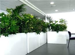 white indoor planter large indoor planters contemporary plant pots planter ideas white with 5 large white white indoor planter hanging large