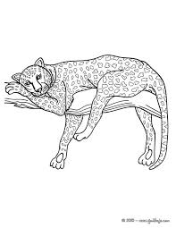 Leopard Colouring Page Animal Coloring Pages For Adults Animal