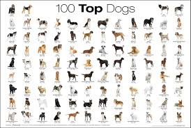 dog chart a chart of the top 100 dog breeds cute dogs puppies