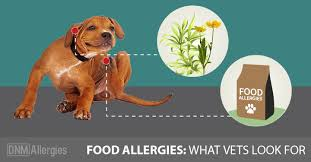 5 Signs Your Dog Has Food Allergies - Dogs Naturally Magazine