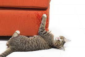 Nailed It Four Ways To Stop Your Cat From Scratching Indoors My Pet And I