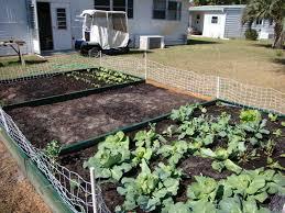 florida vegetable gardening. Florida Garden Update Fall 2010 Vegetable Gardening