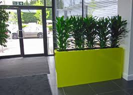 office planter. Acid Yellow Barrier Planter With Green Cordyline Plants In Birmingham Office Reception K