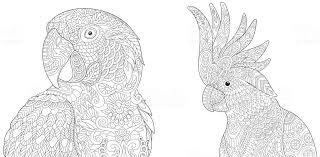 Kleurplaat Pagina Kaketoe Of Ara Papegaaien Stockvectorkunst En Meer