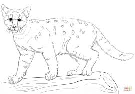 baby cougar coloring page