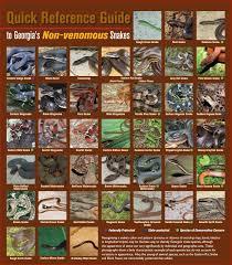 Georgia Snake Identification Chart Georgia Snake Identification Affordable Wildlife Trapping