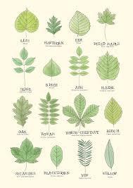 Tree Leaf Identification Chart Leaf Id Chart Greeting Card Leaves Bathroom Plants