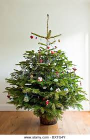 A whole 'real' decorated christmas tree, on a wooden floor, with a
