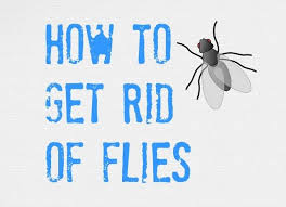 ultimate tips on how to get rid of flies inside and outside