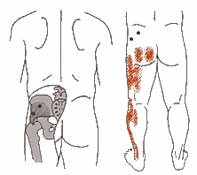 Pain Referral Patterns Gorgeous Biology Of Trigger Points Trigger Point Referred Pain