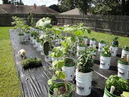 bucket gardening. Container Vegetable Gardening In Buckets Bucket A