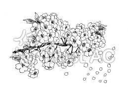 桜の線画02イラスト No 1029280無料イラストならイラストac