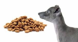 Feeding A Whippet Puppy When What Where And How